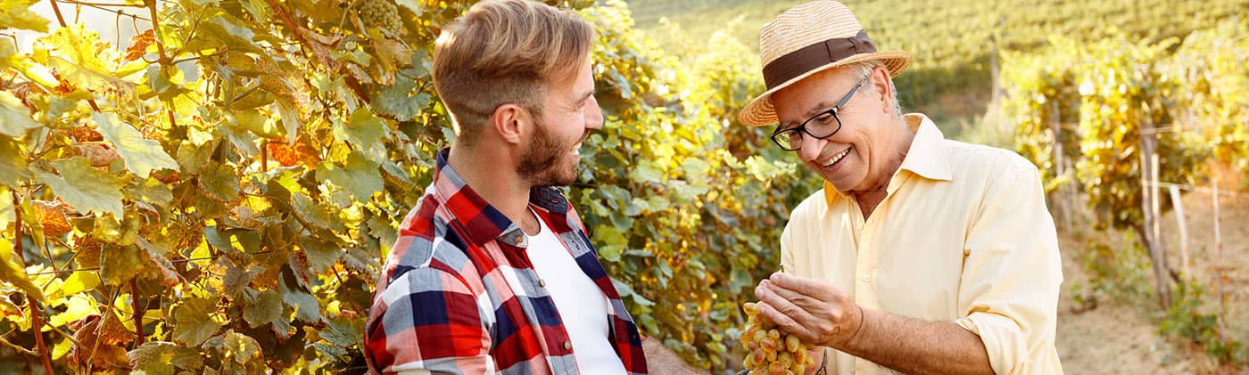 father cuts grapes with son and explains succession planning of turning over the family vineyard business